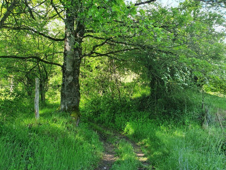 Sentier - Hameau Le Bruel